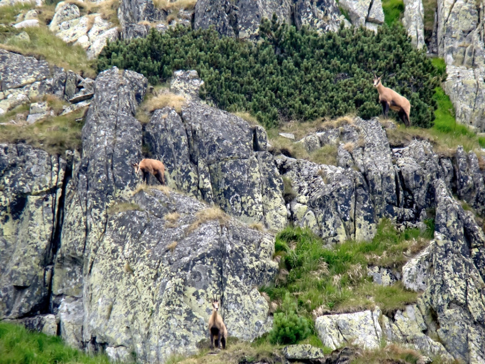 Iată-le, departe de ochii turiștilor, și-au făcut apariția în rezervație