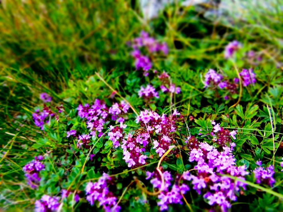 Alte floricele frumușele