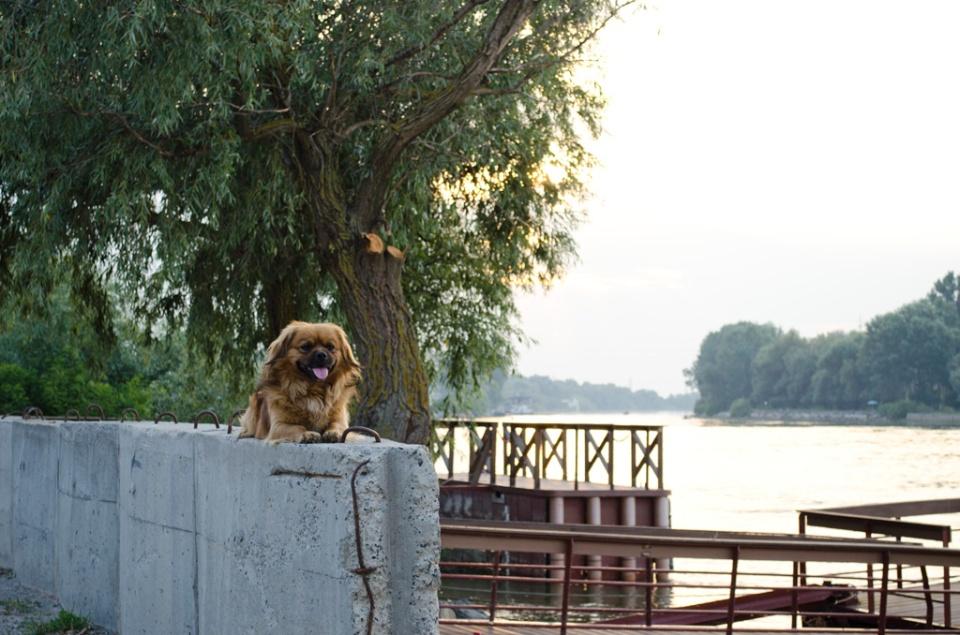 Înapoi în Crișan. Cică o vedetă locală :)