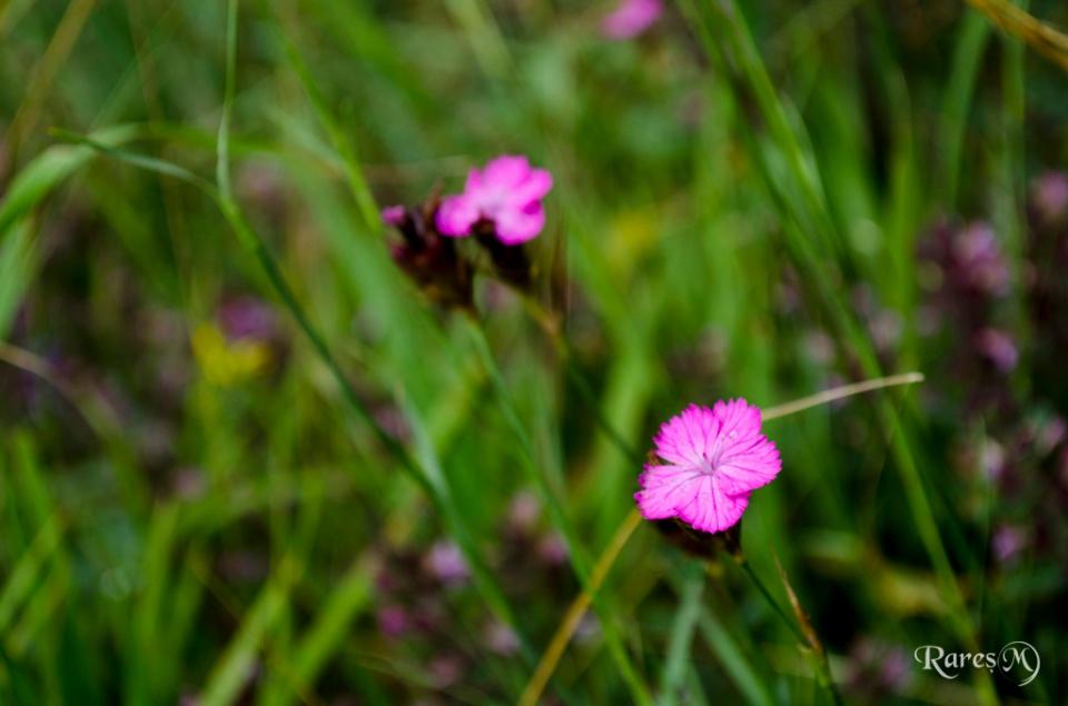 Din nou flori