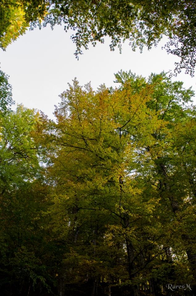 Din nou în pădure