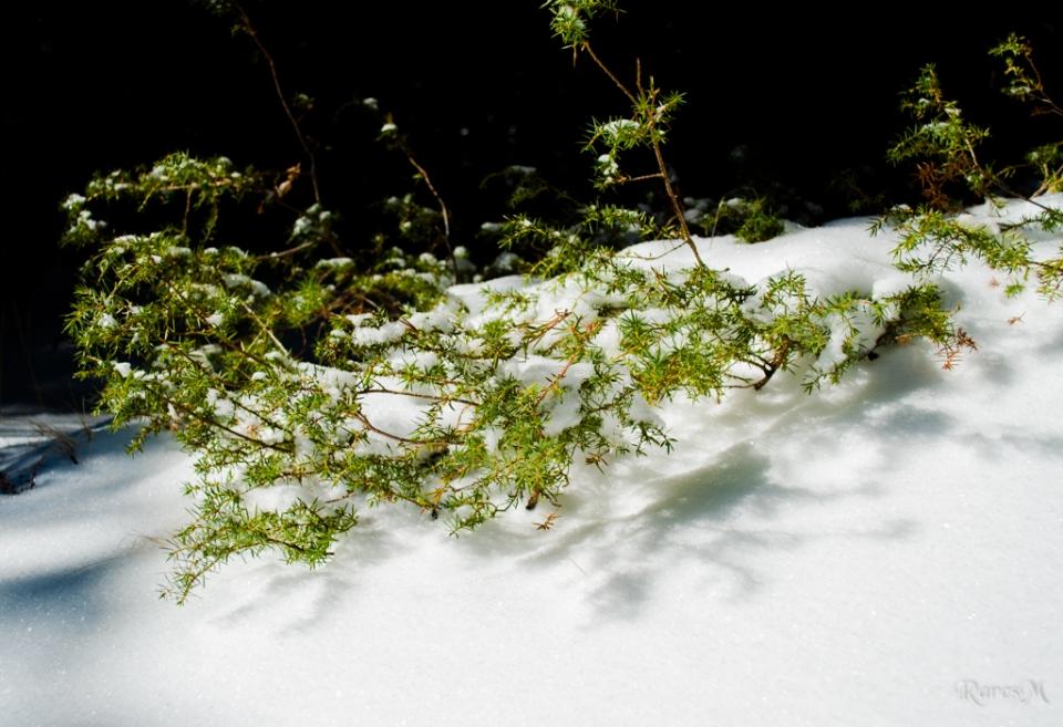 Umbre pe zăpadă