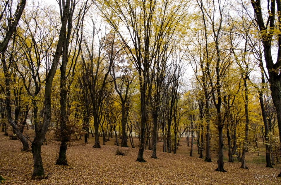 Pădurea Hoia