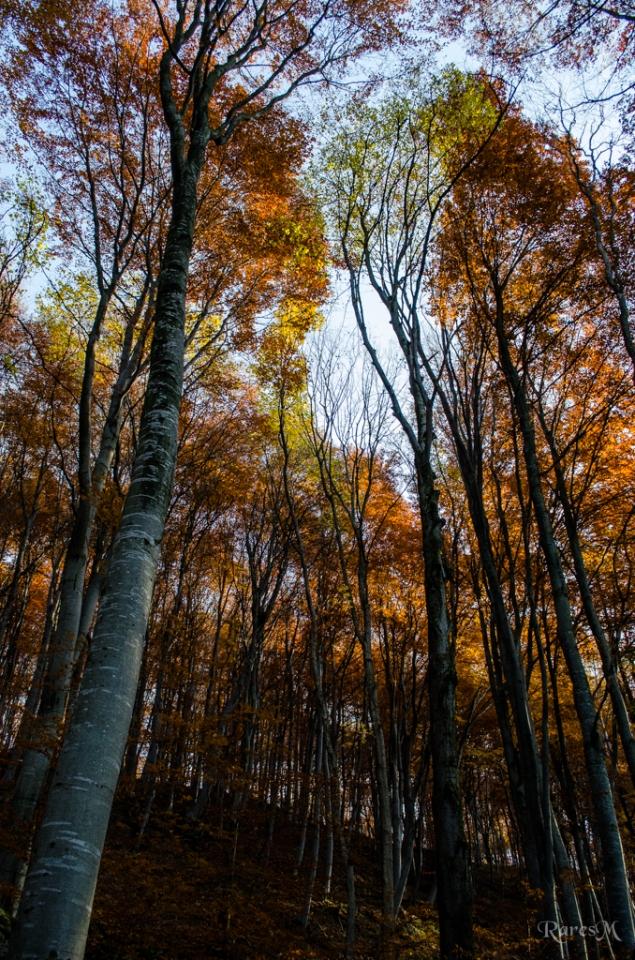 Pădurea Făget